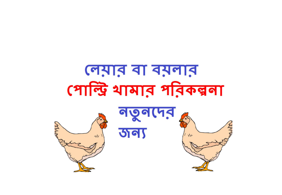 How to Start Poultry Farm in Bangladesh