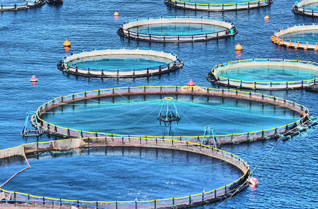 How to Start Fish Farming Business