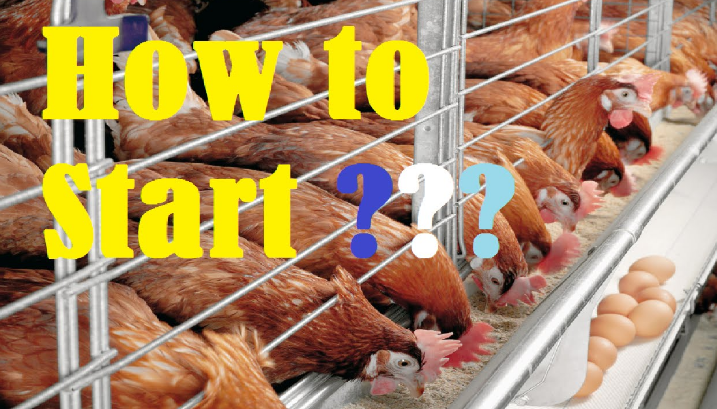 Start Layer Chicken Farming Business