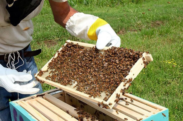 Start Bee Farming Business