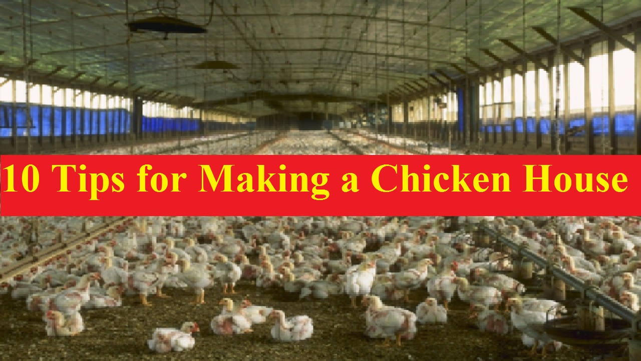 10 Amazing Tips for Making a Chicken House