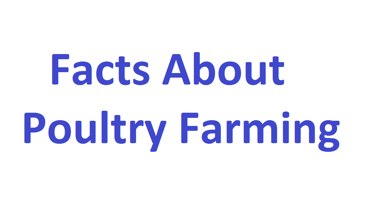 Facts about Poultry Farming