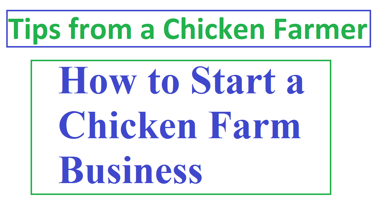 How to Start a Chicken Farm Business - Best TIPS
