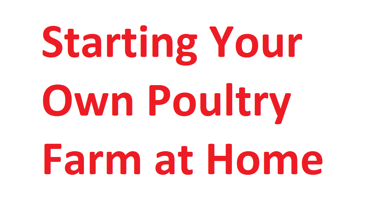Own Poultry Farm at Home