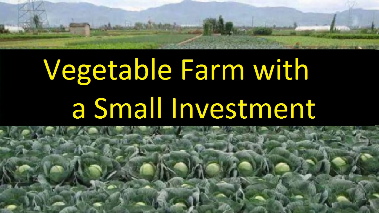 Start a Vegetable farm India Based