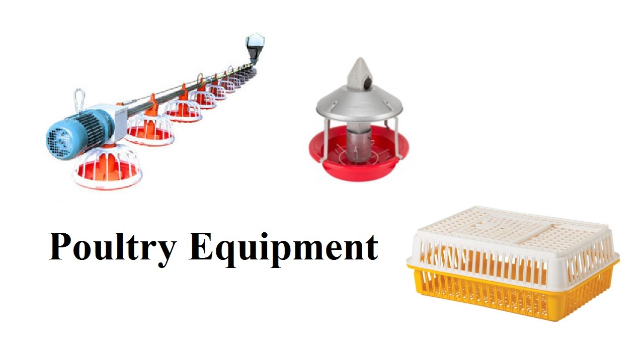 Tips for Poultry Equipment – The Ultimate Guide to Start Poultry Farm