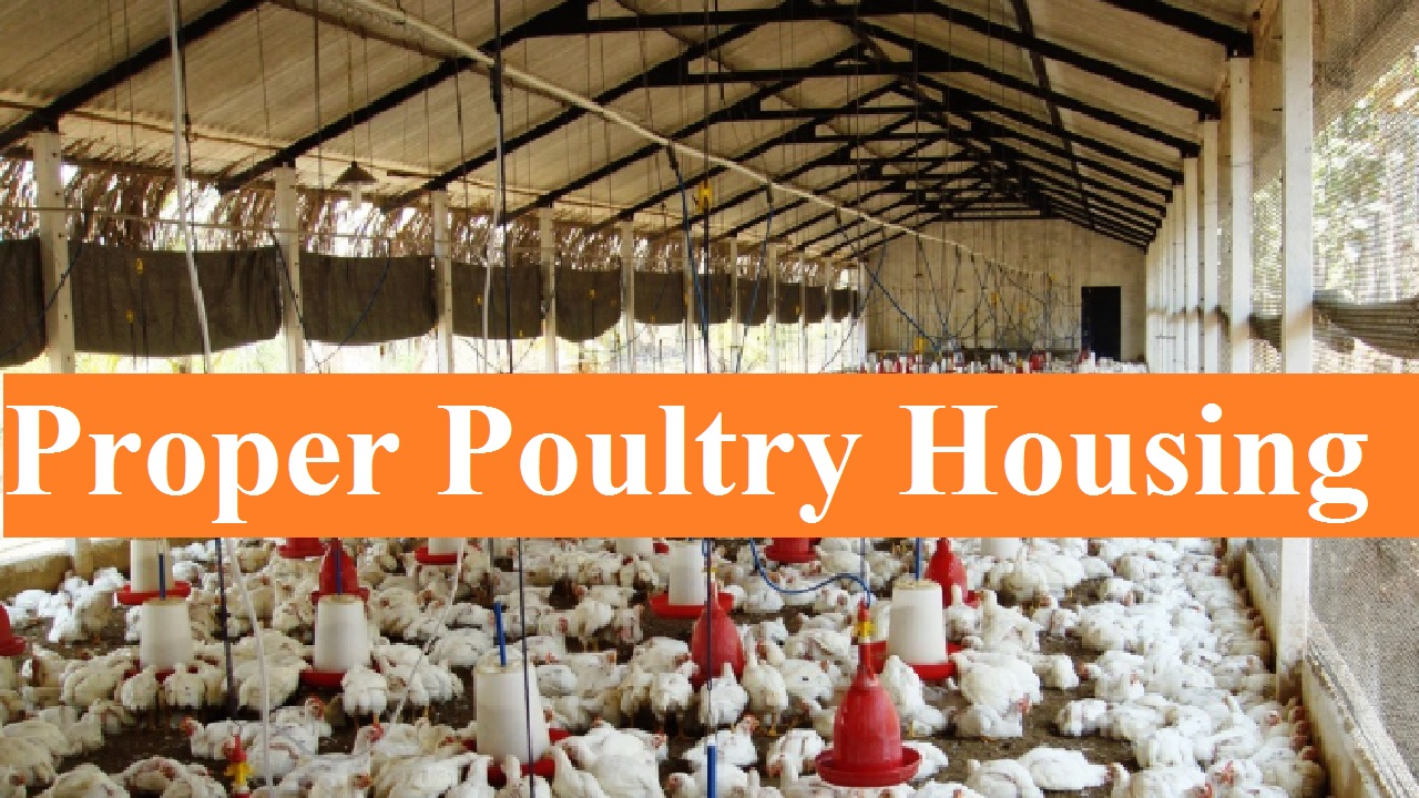 Tips for Proper Poultry Housing