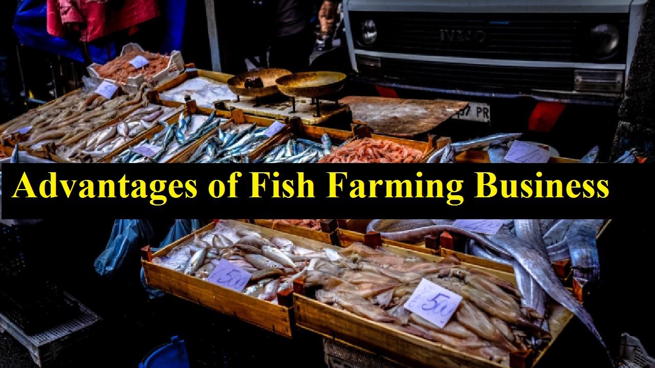 Advantages of Fish Farming Business