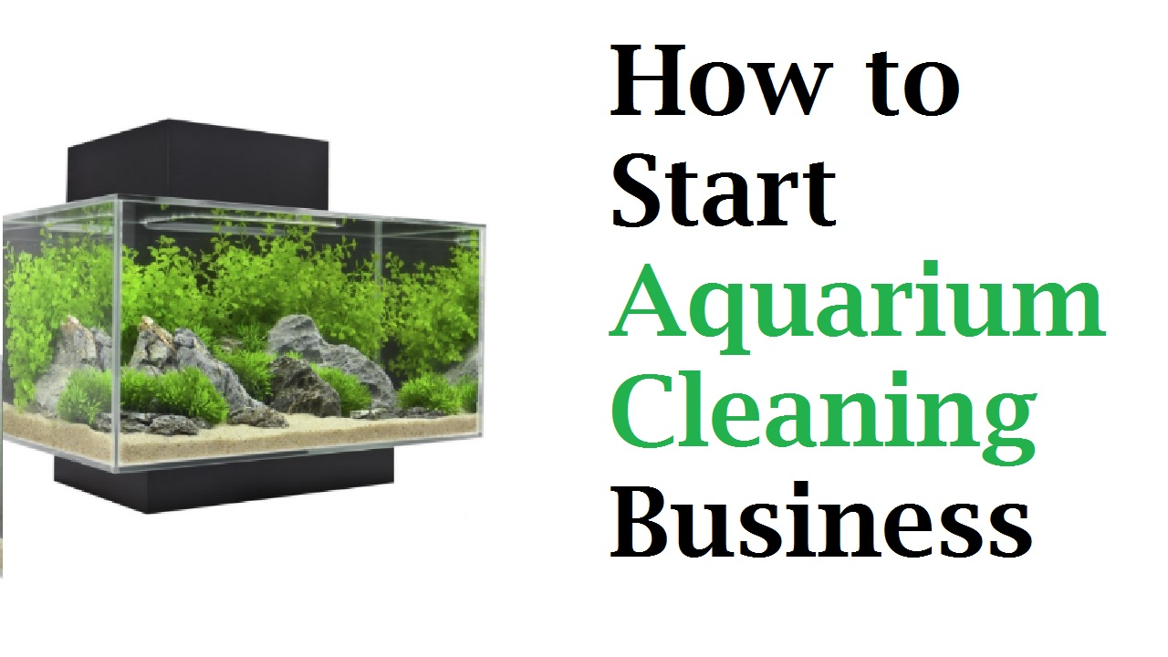 How to Start Aquarium Cleaning Business in the UK