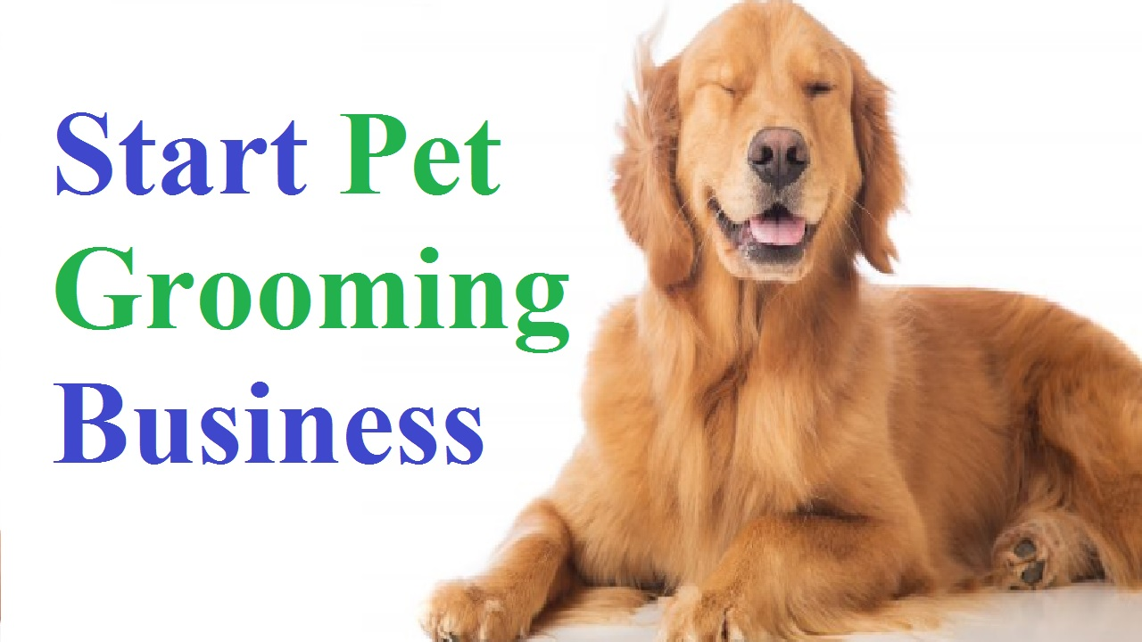 How to Start UK Based Pet Grooming Business - Business Daily 24