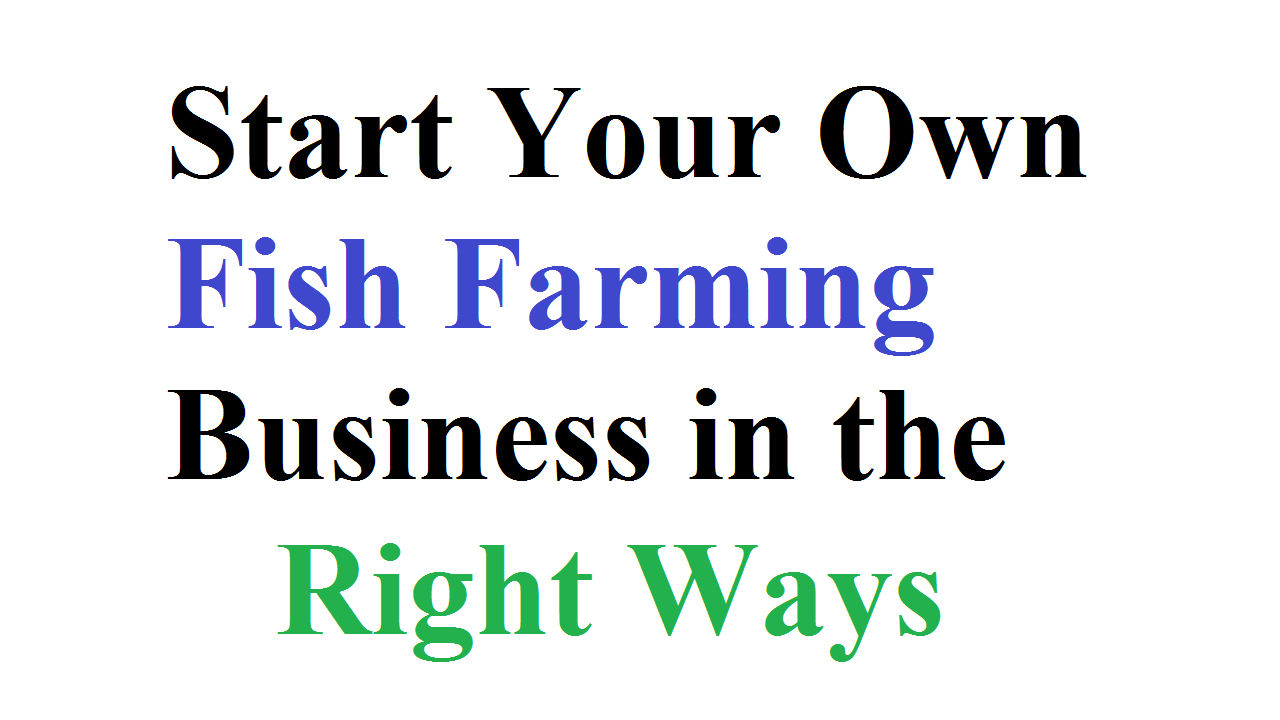 Tips for Fish Farming Business