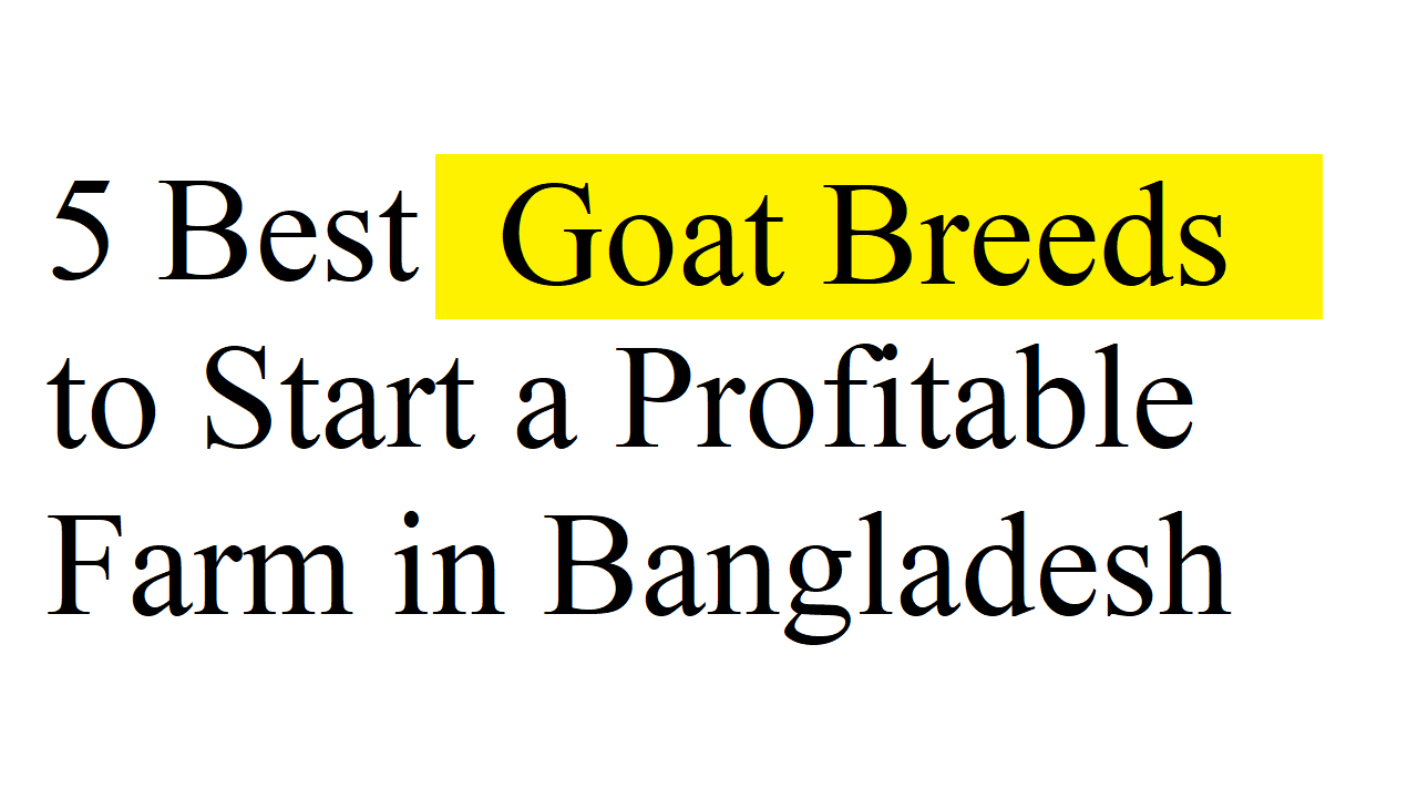 5 Best Goat Breeds to Start a Profitable Farm in Bangladesh