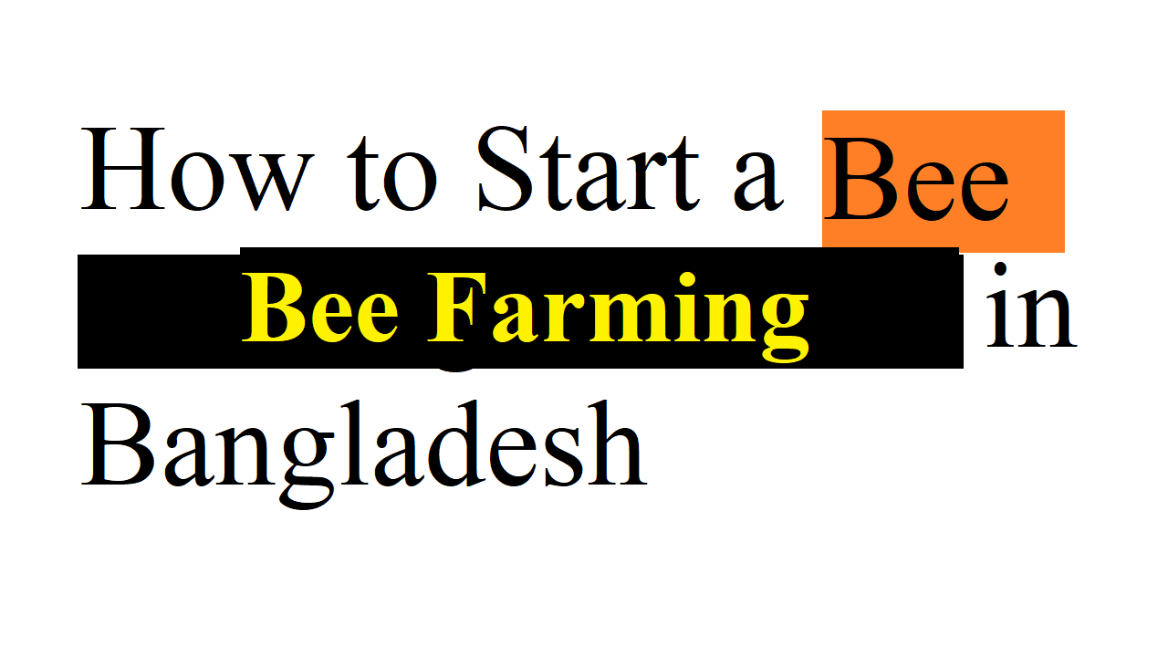 Bee Farming Business in Bangladesh