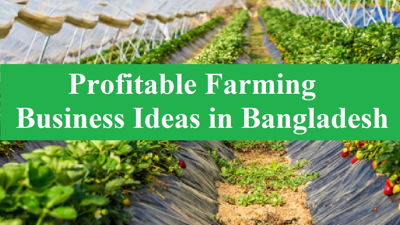 Best 5 Farming Business Ideas in Bangladesh