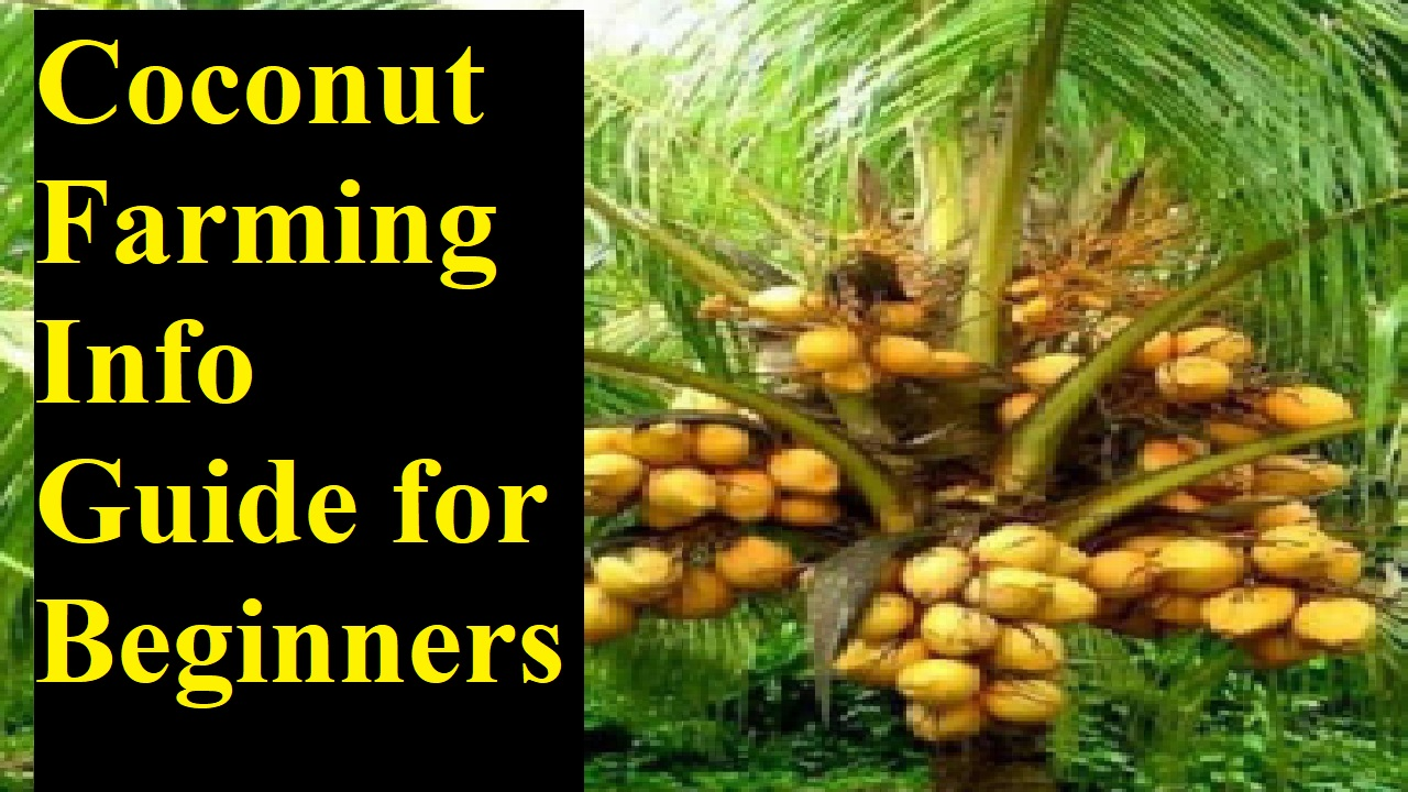 Coconut Farming Info Guide for Beginners