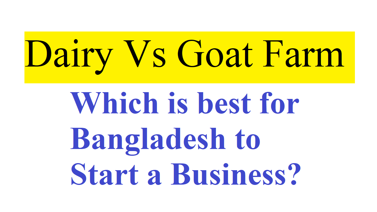 Dairy Vs Goat Farm Which is best for Bangladesh to Start a Business