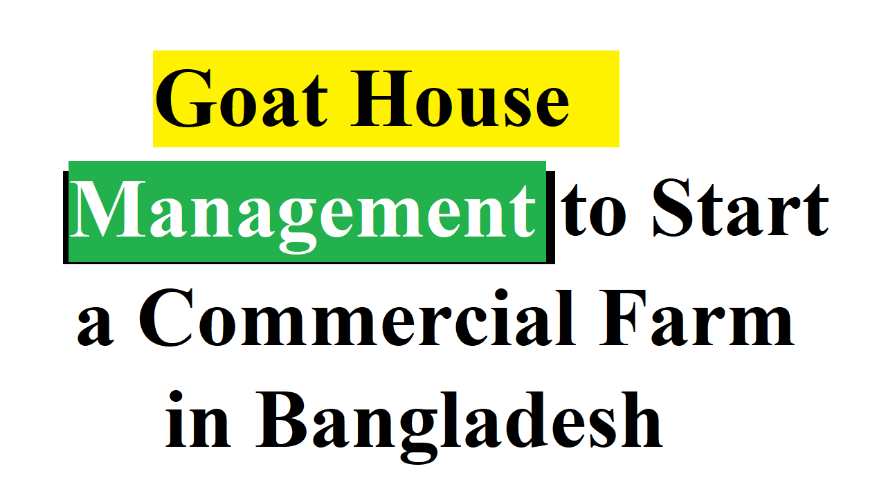 Goat House Management to Start a Commercial Farm in Bangladesh