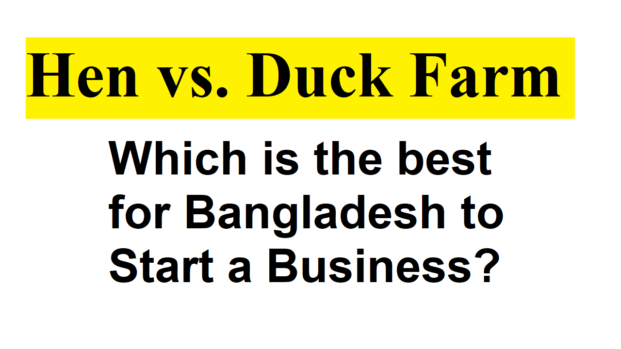 Hen vs. Duck Farm