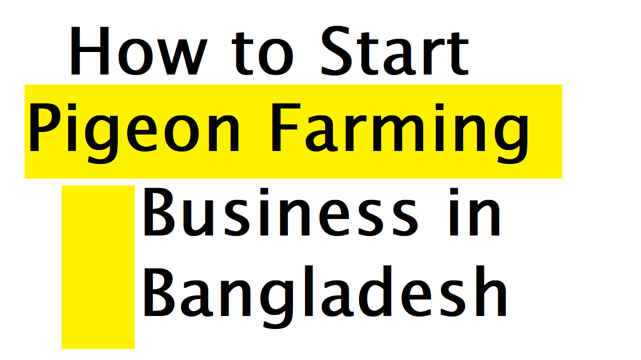 How to Start Pigeon Farming Business in Bangladesh