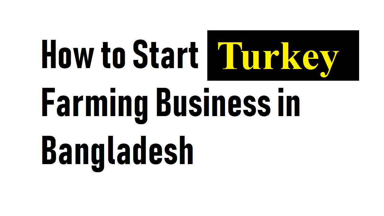 How to Start Turkey Farming Business in Bangladesh