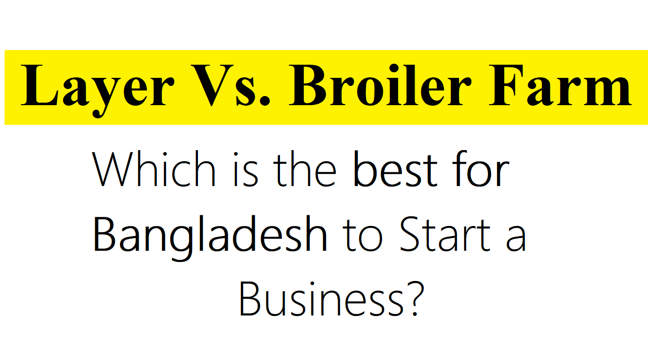 Layer Vs. Broiler Farm Which is the best for Bangladesh