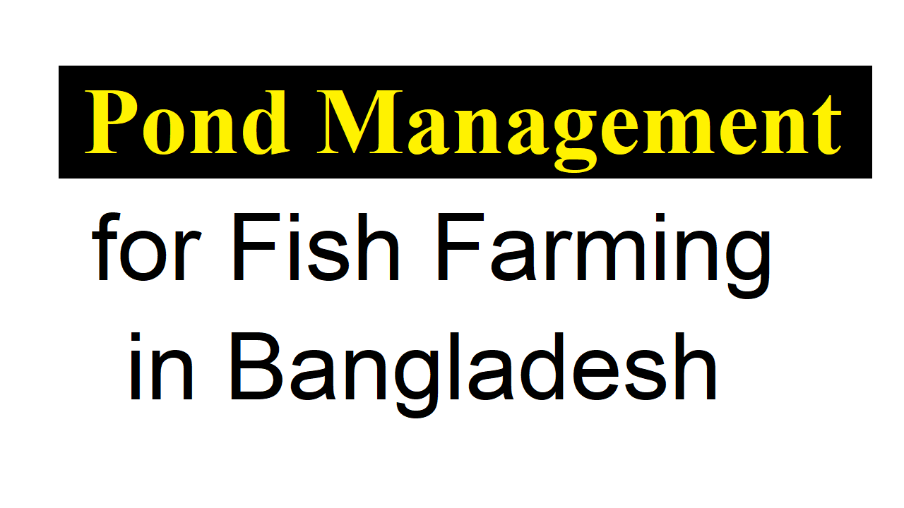 Pond Management for Fish Farming in Bangladesh