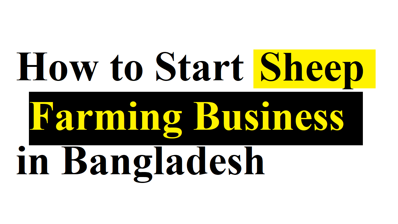 Sheep Farming Business in Bangladesh