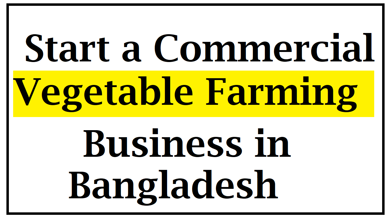 Start Commercial Vegetable Farming Business in Bangladesh