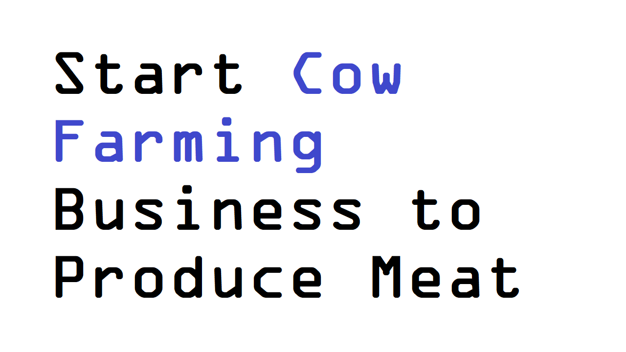 Start Cow Farming Business to Produce Meat