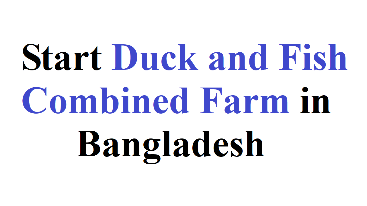 Start Duck and Fish Combined Farm in Bangladesh