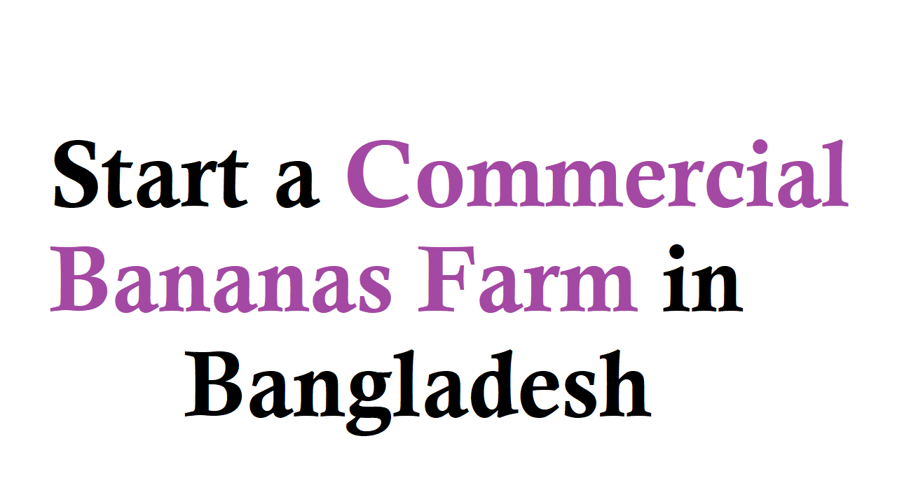 Start a Commercial Bananas Farm in Bangladesh