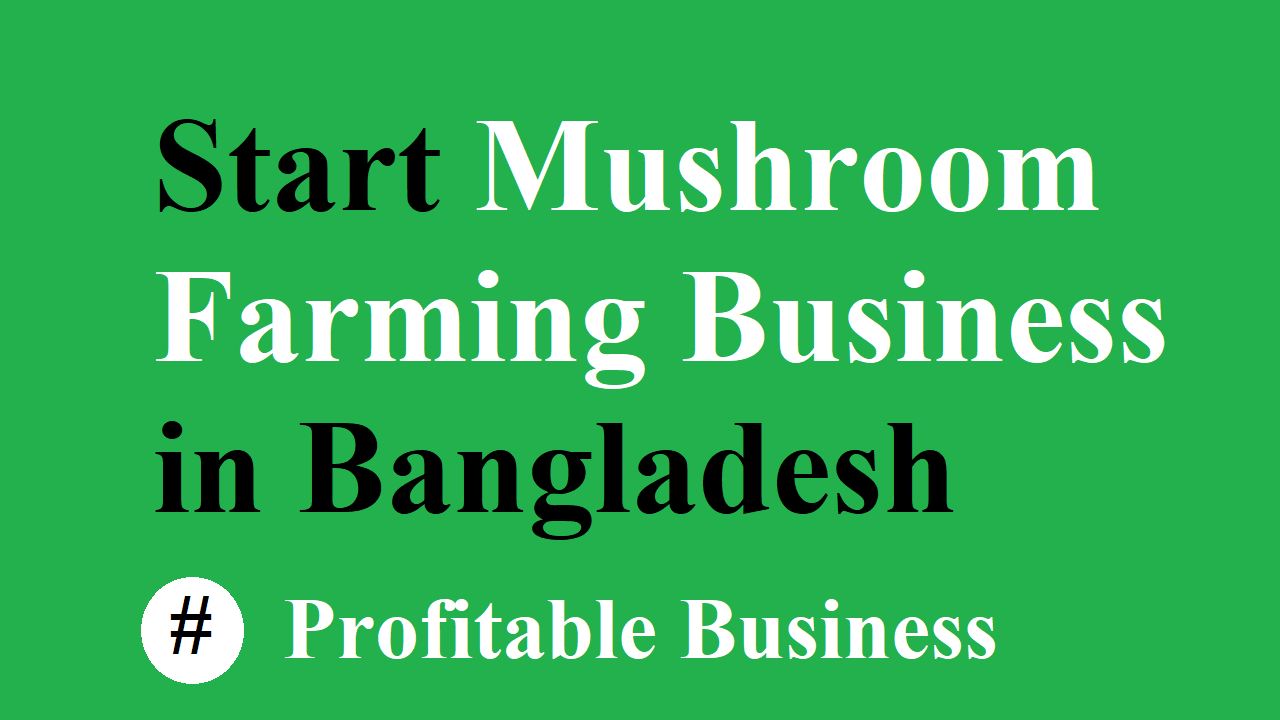 Start a Mushroom Farming Business in Bangladesh