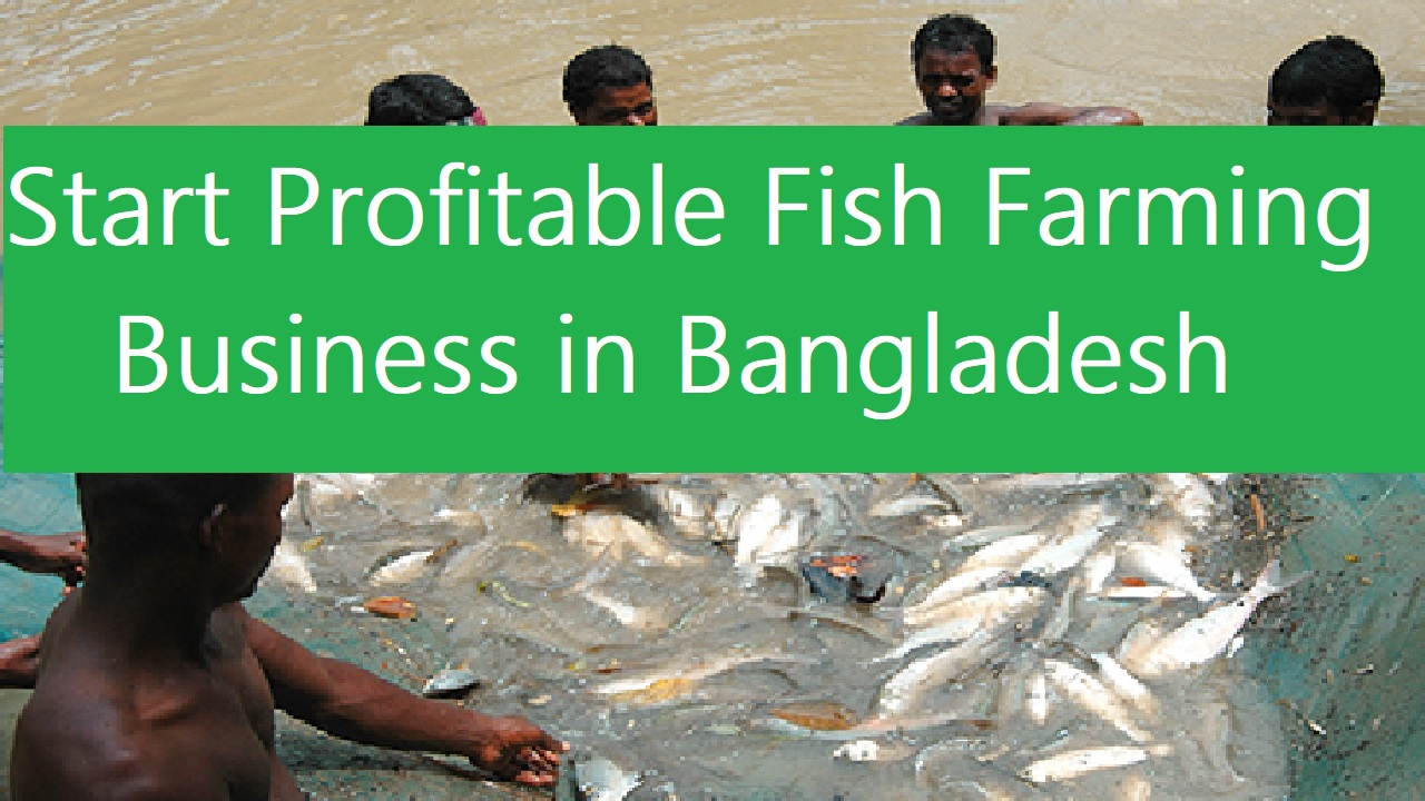 Start a Profitable Fish Farming Business in Bangladesh
