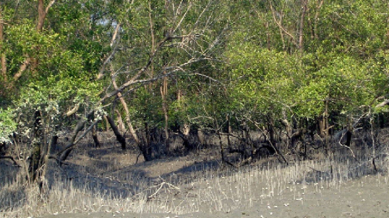 Sundarbans Mangrove Forest - Tourist Attractions in Bangladesh