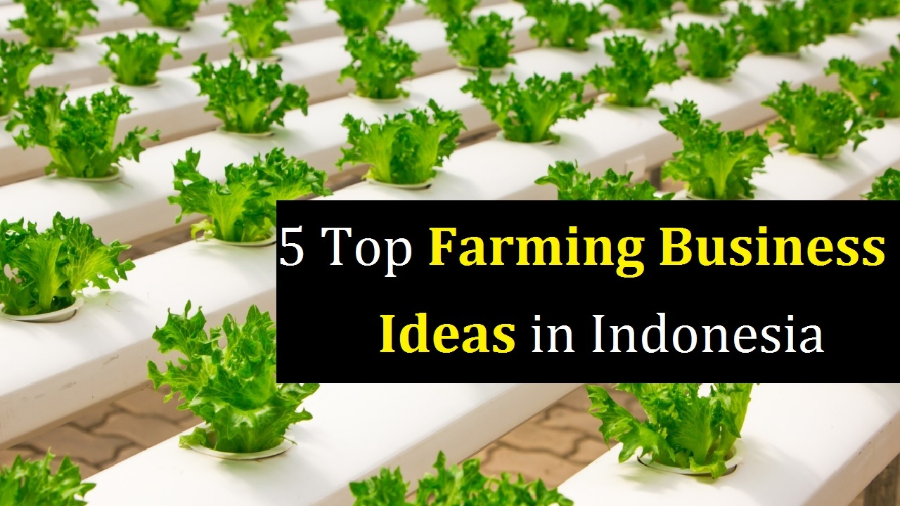 5 Top Farming Business Ideas in Indonesia